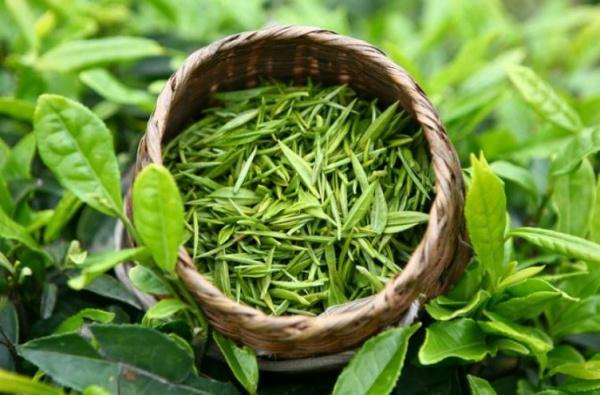 5 loại xịt khoáng cho da dầu cực hot năm nay chiết xuất từ trà xanh